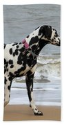 Dalmatian By The Sea Beach Towel