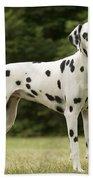 Dalmatian Dog Beach Towel