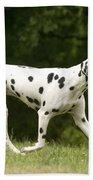 Dalmatian Running Beach Towel
