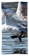 Dancing Swan Beach Towel