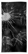 Dandelion Burst Beach Towel