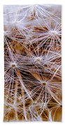 Dandelion Closeup Beach Towel