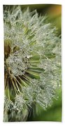 Dandelion With Water Drops Beach Towel