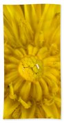 Dandelion With Waterdrop Beach Towel
