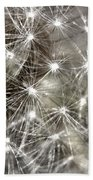 Dandillion Seed Head 2 Beach Towel