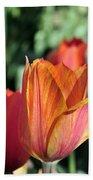 Darby's Tulip 5161 Beach Towel