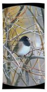 Dark- Eyed Junco Beach Towel