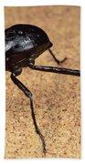 Darkling Beetle Bends Down To Drink Dew Beach Towel