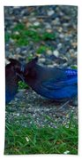 Darling I Have To Tell You A Secret-sweet Stellar Jay Couple Beach Towel