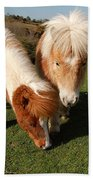 Dartmoor Ponies  Beach Towel