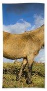 Dartmoor Pony Beach Towel