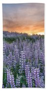 Dawn Of Lupine Beach Towel