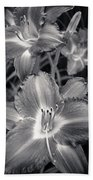 Day Lilies In Black And White Beach Towel by Adam Romanowicz