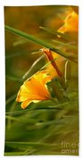 Day Lily Backlit Beach Towel