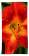 Day Lily1 Beach Towel