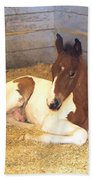 Day Old Colt Beach Towel