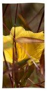 Daylily In Autumn Beach Sheet