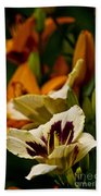 Daylily Picture 487 Beach Towel