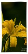 Daylily Picture 539 Beach Towel