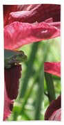 Daylily Shade For A Tree Frog Beach Towel