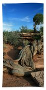 Dead Horse Point Tree 1 Beach Towel