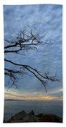 Dead Tree At Otter Cliffs Beach Towel