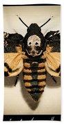 Deaths Head Hawk Moth Framed Version Beach Towel