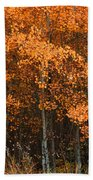 Deciduous Aspen Forest In Fall Beach Towel