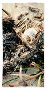 Decomposing Dead Bird Beach Towel