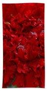 Deep Red Carnation 2 Beach Towel