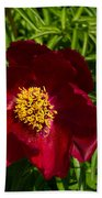 Deep Red Peony With Bright Yellow Stamens  Beach Towel