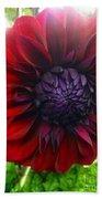 Deep Red To Purple Dahlia Flower Beach Towel