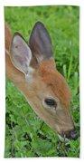Deer 12 Beach Towel