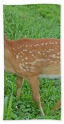 Deer 19 Beach Towel