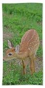 Deer 7 Beach Towel