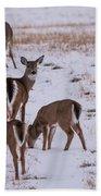 Deer At Dusk Beach Towel