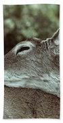 Deer Close-up Beach Towel