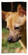 Deer-head Chihuahua Beach Towel