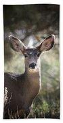 Deer I Beach Towel