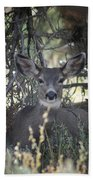 Deer II Beach Towel