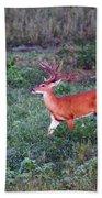 Deer-img-0113-001 Beach Towel