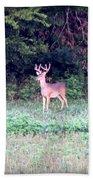 Deer-img-0122-7 Beach Towel