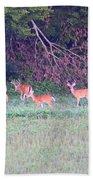 Deer-img-0128-005 Beach Towel