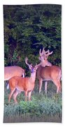 Deer-img-0150-001 Beach Towel