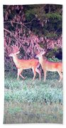 Deer-img-0151-003 Beach Towel
