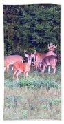 Deer-img-0156-002 Beach Towel