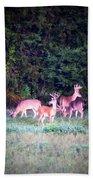 Deer-img-0158-003 Beach Towel