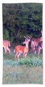 Deer-img-0160-005 Beach Towel