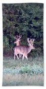 Deer-img-0177-001 Beach Towel