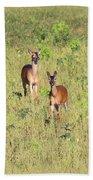 Deer-img-0283-001 Beach Towel